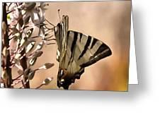 Scarce Swallowtail Feeding Greeting Card