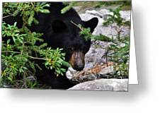 Scareface Bruin Greeting Card