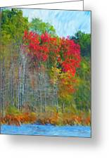Scarlet Autumn Burst Greeting Card