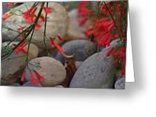 Scarlet Bugler Blossoms On Rocks Greeting Card