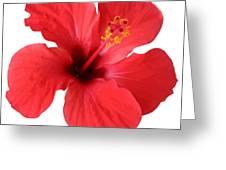 Scarlet Hibiscus Tropical Flower  Greeting Card