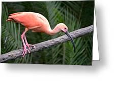 Scarlet Ibis Greeting Card