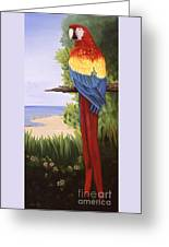 Scarlet Macaw Greeting Card