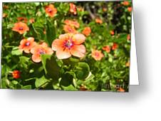 Scarlet Pimpernel Flower Photograph Greeting Card