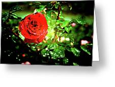 Scarlet Raindrops Greeting Card