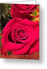Scarlet Roses Greeting Card