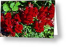 Scarlet Snapdragons At Pilgrim Place In Claremont-california  Greeting Card