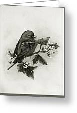 Scarlet Tanager - Black And White Greeting Card