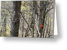 Scarlet Tanager Male Facing Greeting Card