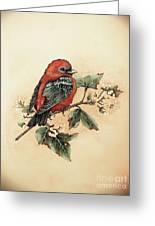 Scarlet Tanager - Vintage Greeting Card