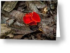 Scarlet Underfoot Greeting Card