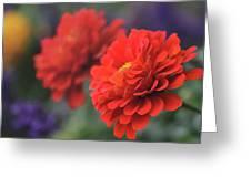 Scarlet Zinnias Greeting Card