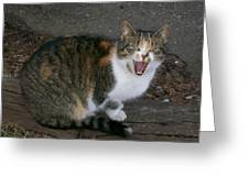 Scary Kitty Greeting Card