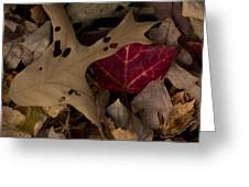 Scary Leaves Greeting Card