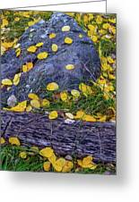 Scattered Aspen Leaves Greeting Card