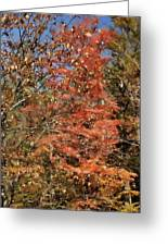 Scenic Autumn  Greeting Card