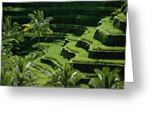 Scenic Valleys With Rice Fields In Bali Greeting Card
