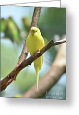 Scenic View Of An Adorable Yellow Parakeet Greeting Card