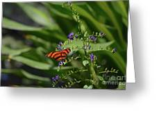 Scenic View Of An Orange Oak Tiger Butterfly Greeting Card