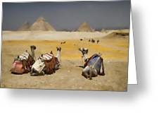 Scenic View Of The Giza Pyramids With Sitting Camels Greeting Card