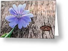 Scent  Florist Greeting Card