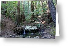 Scents And Subtle Sounds On Mount Tamalpais Greeting Card