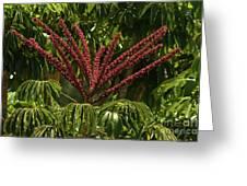 Schefflera Flower Greeting Card