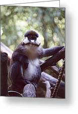 Schmidts Guenon Greeting Card