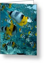 School Of Butterflyfish Greeting Card