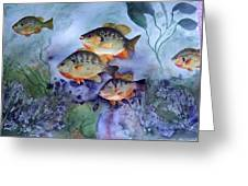 School's Out - Bluegills Greeting Card