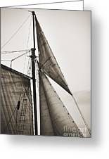 Schooner Pride Tall Ship Yankee Sail Charleston Sc Greeting Card