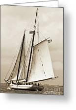 Schooner Sailboat Spirit Of South Carolina Sailing Greeting Card by Dustin K Ryan