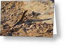 Schreiber's Fringe-fingered Lizard Greeting Card