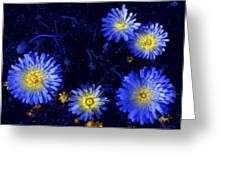 Scintillating Daisies Greeting Card