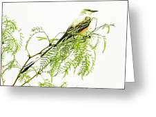Scissortail On Mesquite Greeting Card