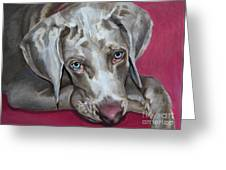 Scooby Weimaraner Pet Portrait Greeting Card