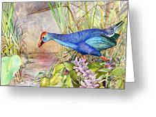 Scooting Coot - Purple Swamphen Greeting Card