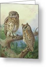 Scops Owl By Thorburn Greeting Card
