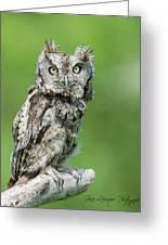 Scops Owl Greeting Card