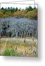 Scorton Creek Treeline Greeting Card