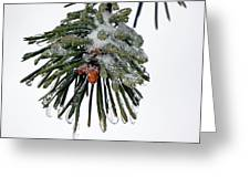 Scots Pine And Ice Greeting Card