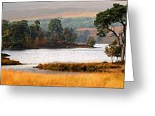 Scots Pine Loch Tulla Greeting Card