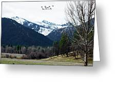 Scott Valley Greeting Card