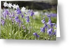 Scottish Bluebells Greeting Card