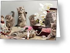 Scottish Fold Cats Greeting Card