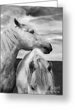 Scottish Horses Greeting Card