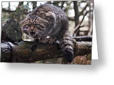 Scottish Wildcat Greeting Card