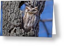 Screech Owl #1 Greeting Card