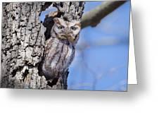 Screech Owl #2 Greeting Card
