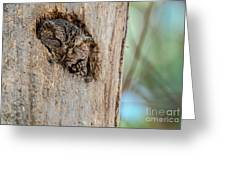 Screech Owl In A Tree Greeting Card